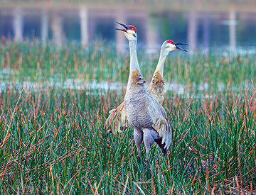 Florida RV Campground with Good Bird Watching